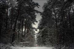WinterWald-Spaziergang
