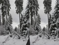 Winterwald-Stereo