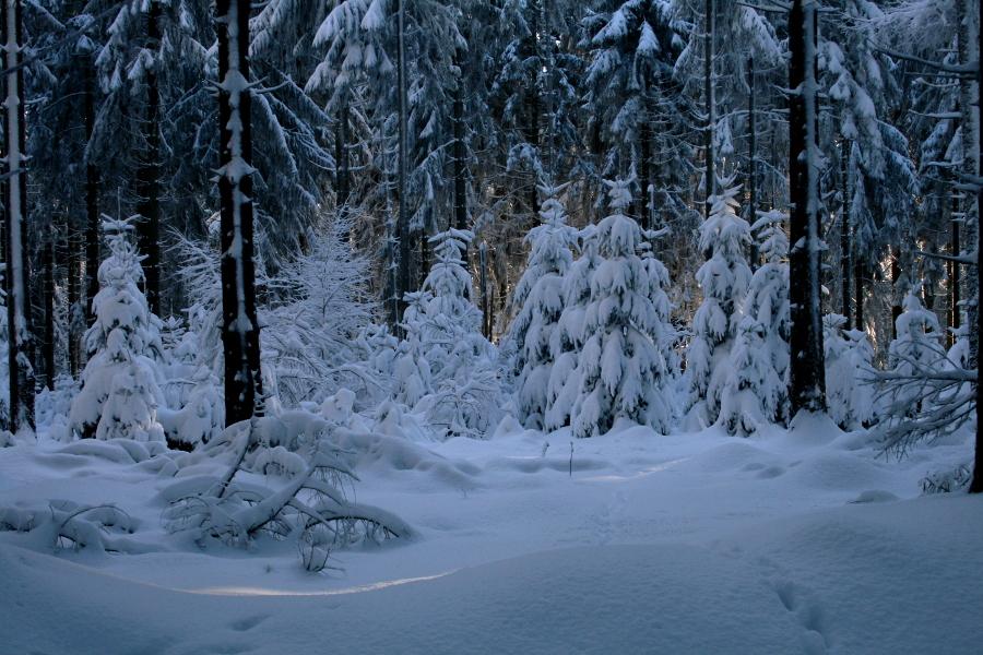 Winterwald V