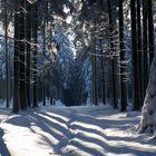 Winterwald VII