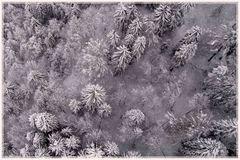 Winterwald von oben