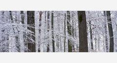 Winterwaldfarben