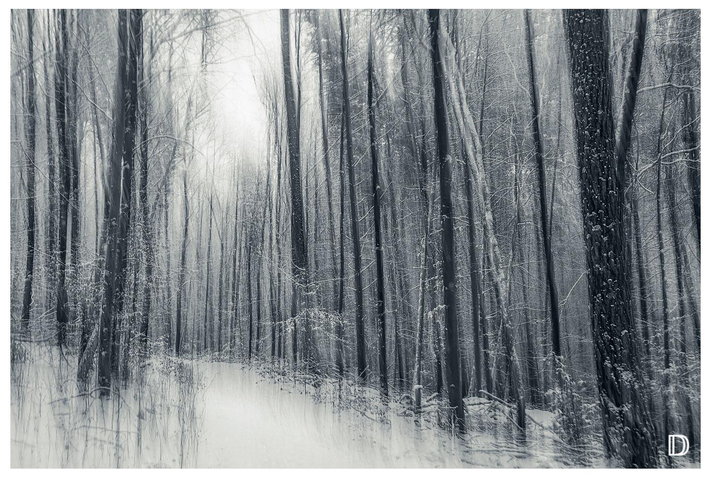/WinterWald//I