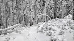 Winterwanderung bei minus 19 Grad / 1