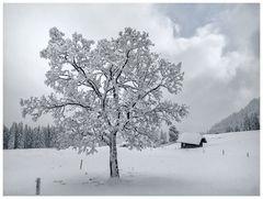 Winterwanderung bei minus 19 Grad / 3