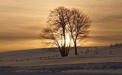 Winterwanderung II