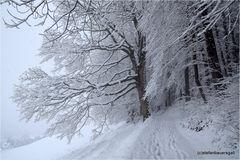 """winterway-I"""