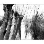 winterweiden