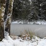 Winterweiher bei Winkelhaid