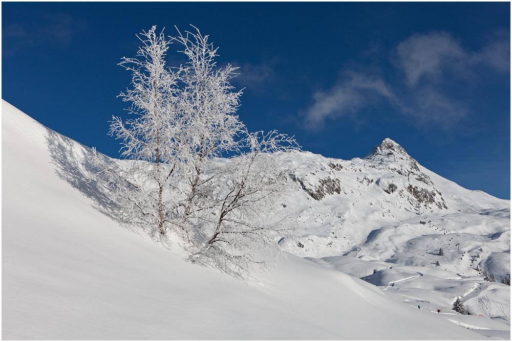 winterweiss
