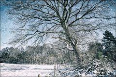 Winterwelt #8