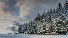 Winter.Wolken.Wald