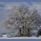 Winterwonderland (1 von 1)