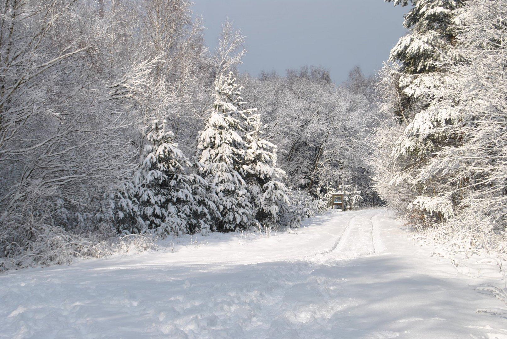 Winterwonderland!