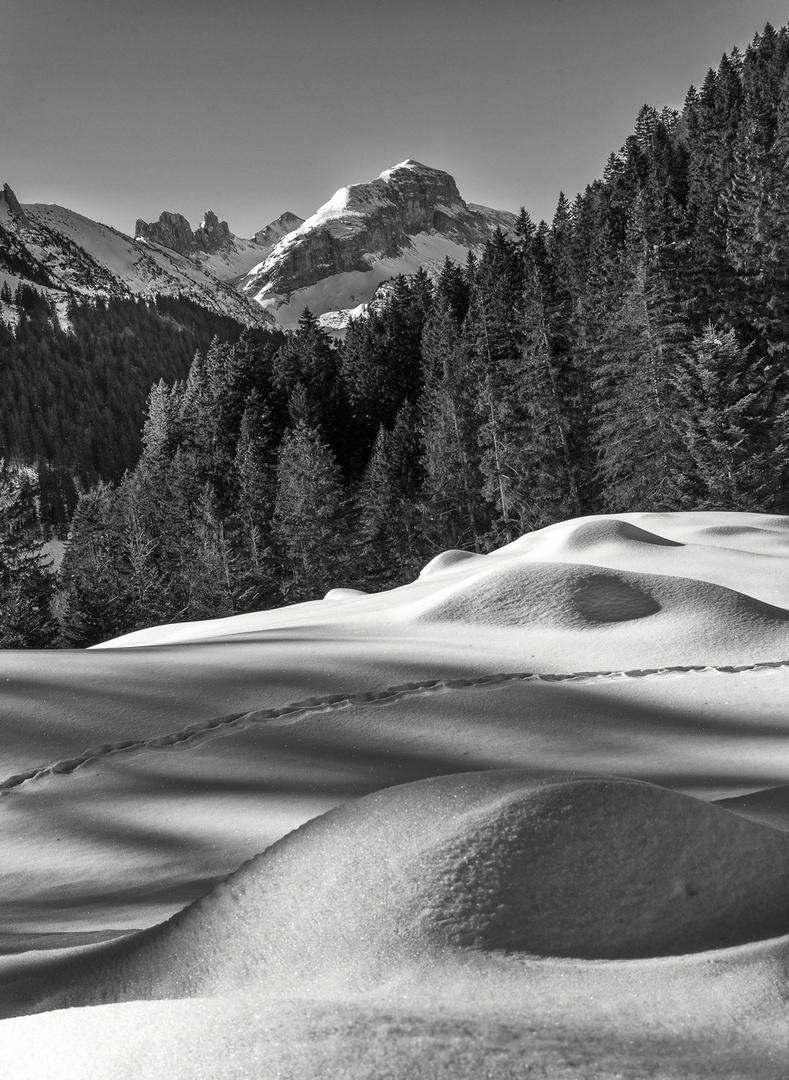 ... winterwonderland ...