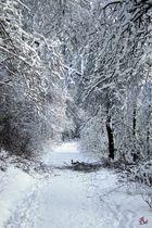 Winterwonderland am Dörenberg im Osnabrücker Land