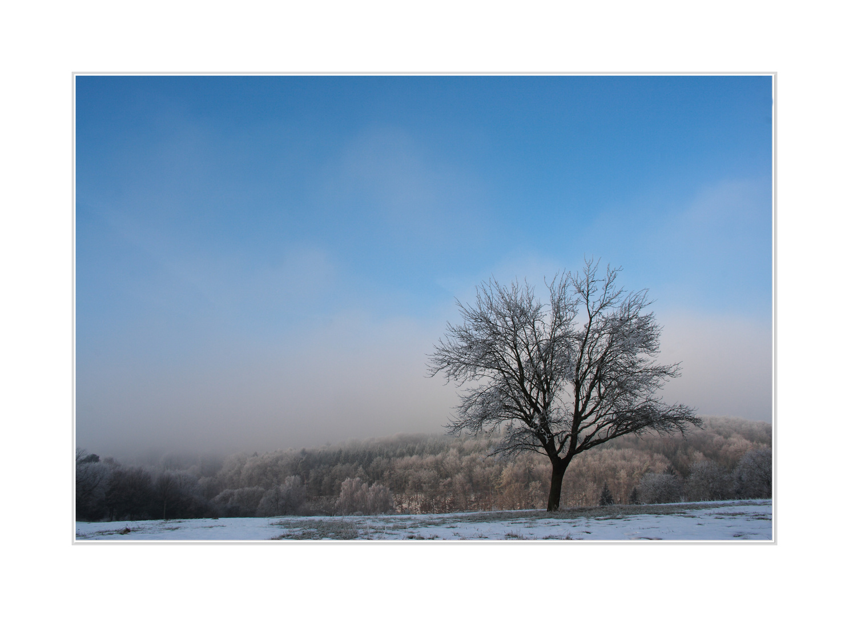 Winterwonderland V