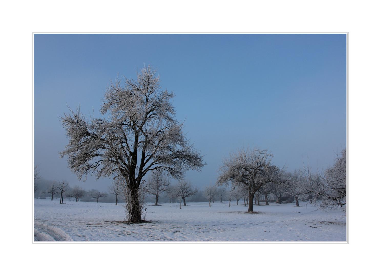 Winterwonderland VII