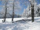 Winterwunderland Steinwald