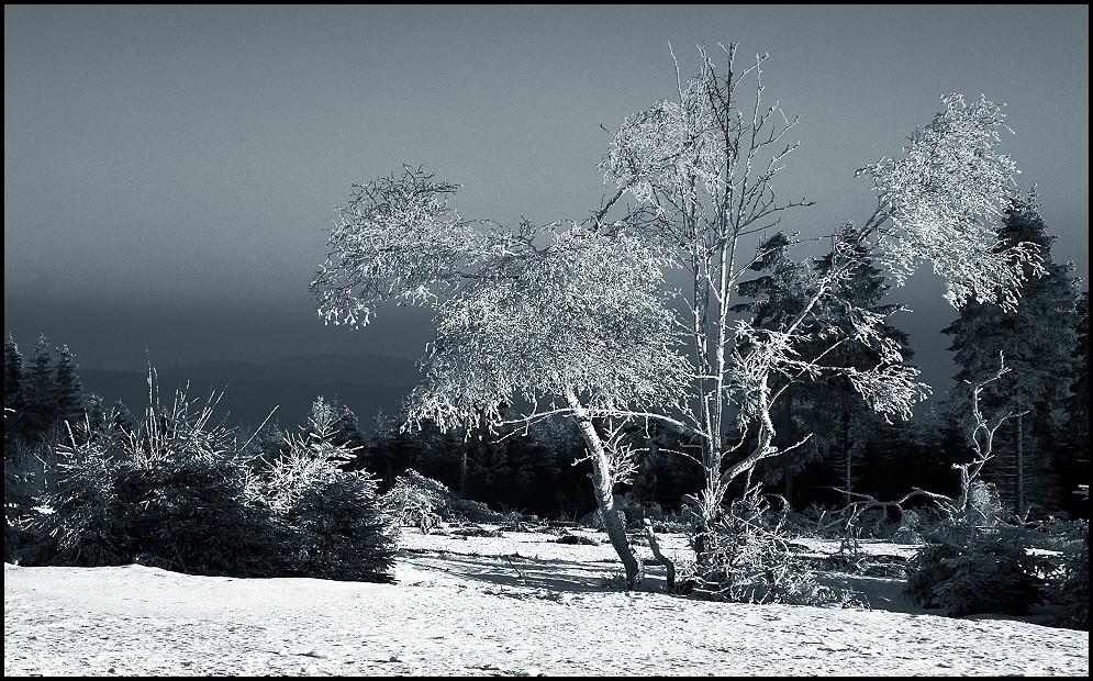 winterwunderwelt.....