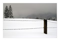 Wintery - Winterlich