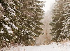 Winterzauber 2