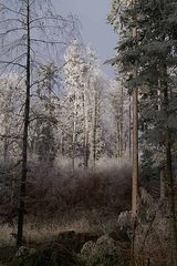 Winterzauber an der Nebelgrenze