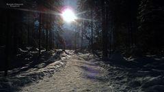 """Winterzauber bei Tannheim in Tirol 3"""