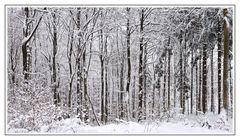 Winterzauber-Wald