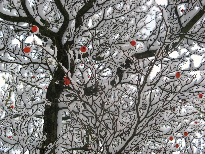 WinterZeit = SchöneZeit...
