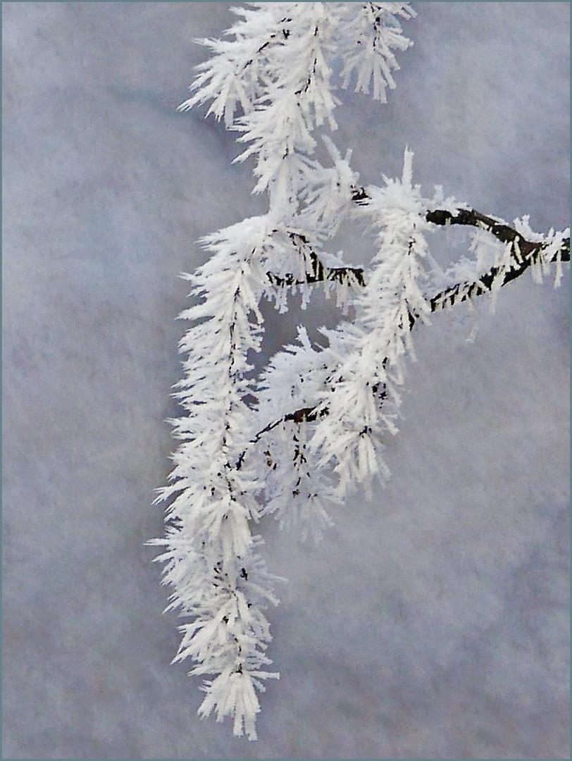 Winterzweige