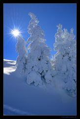 Winterzwerge
