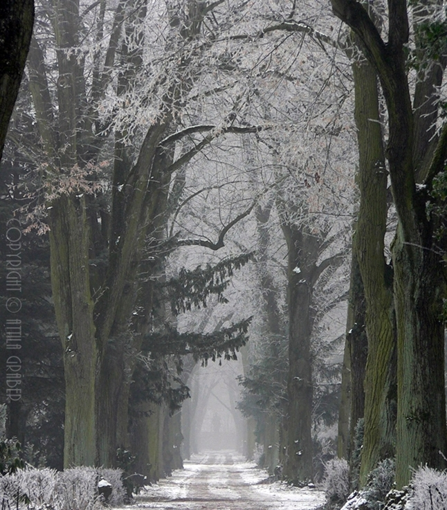 wintry alley