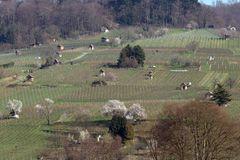 Winzerhäuschen in den Weinbergen bei Heppenheim a. d. Bergstraße