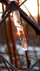 Winzige Schönheit der Kälte