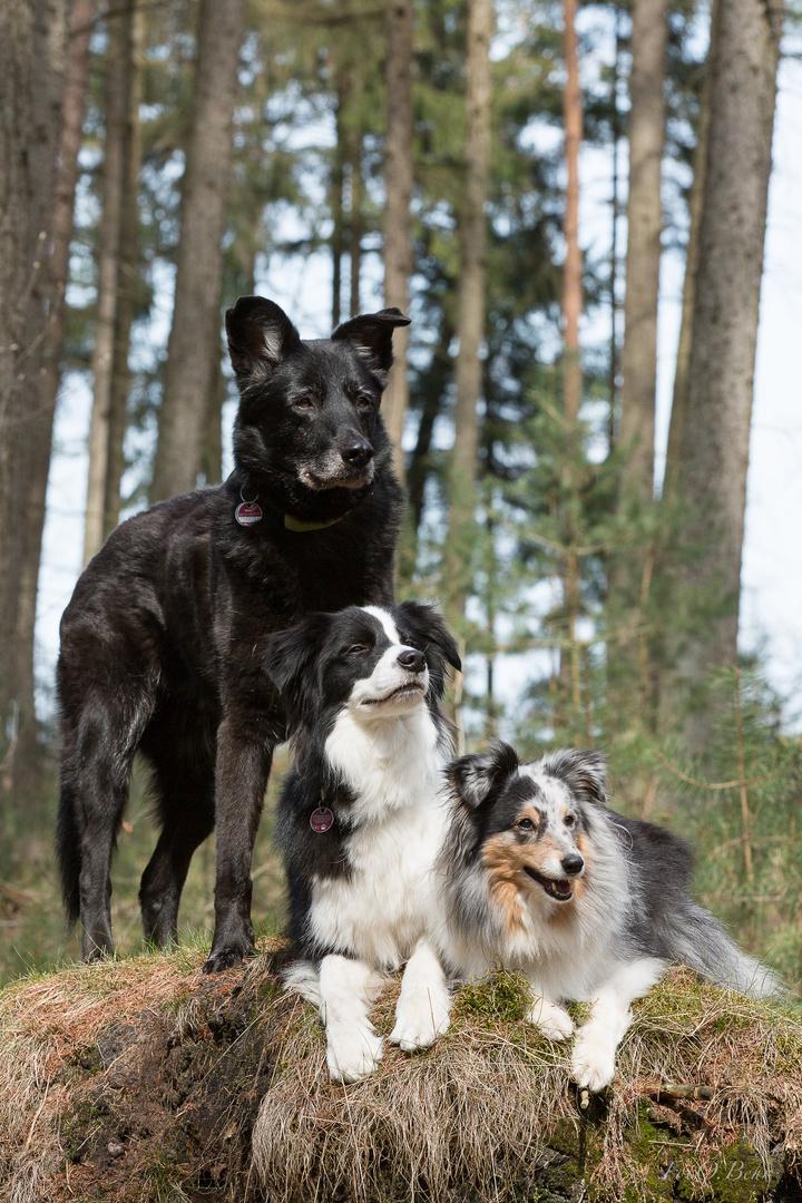 Wir drei...