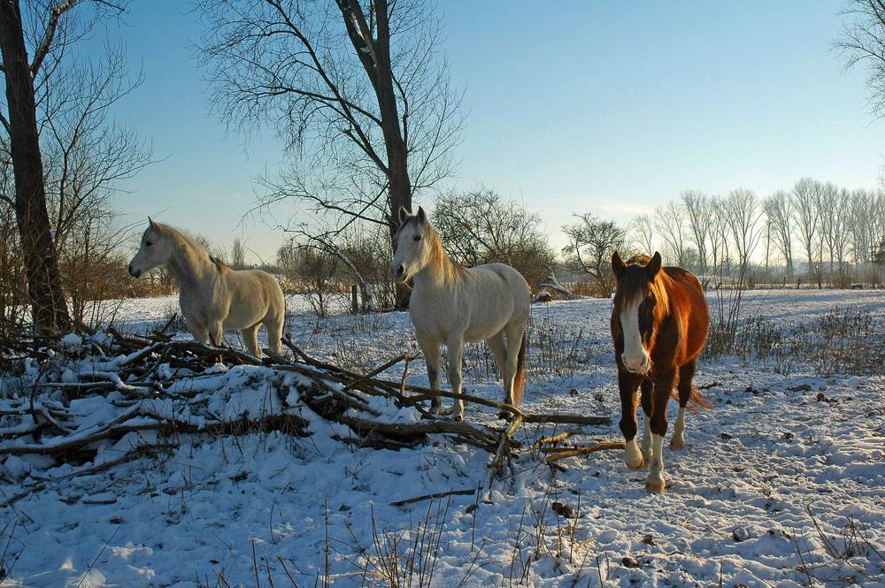 Wir drei sind winterfest