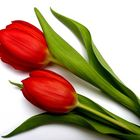 Wir gratulieren der lieben Annette ;)