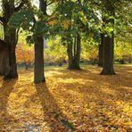 Wir haben Herbst - man kann es nicht mehr leugnen