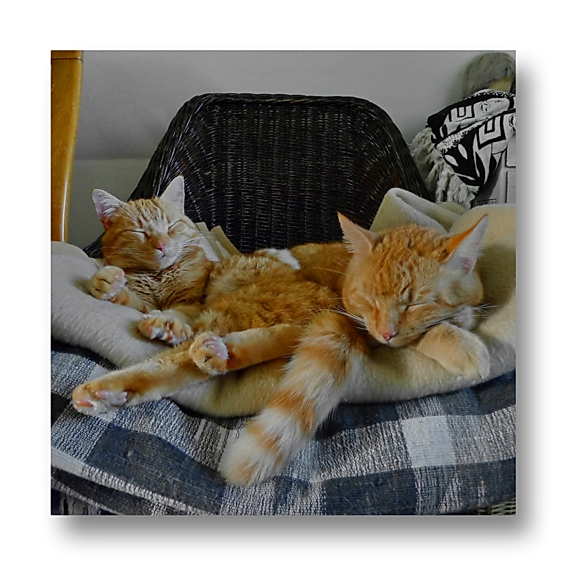 ... wir machen einen Winterschlaf...  ( p a u s e )