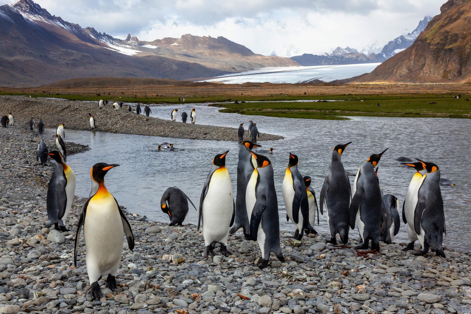 Wir sind die Könige unter den Pinguinen...