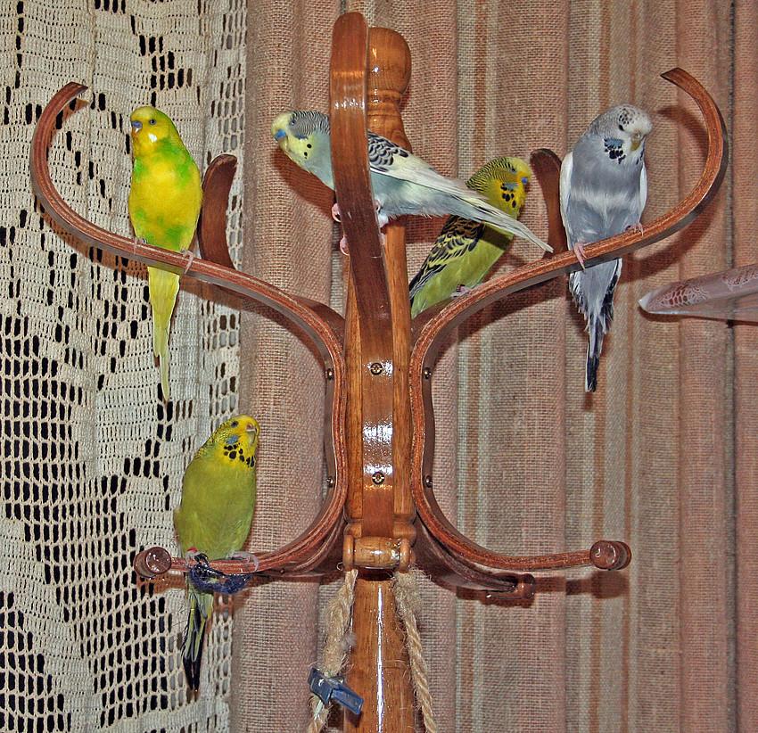 wir sind sooo traurig da gestern bei sanna unsere freundin in den vogelhimmel geflogen ist