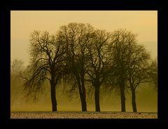 ...wir stehen zusammen... - oder: die Kastanie, ein Baum mit Charakter...