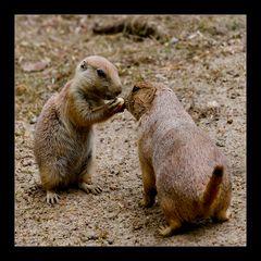 wir teilen ..... (alles muss raus #3)