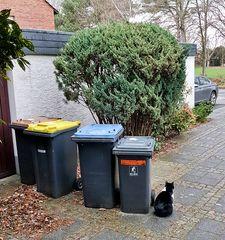 Wir warten auf die Müllabfuhr