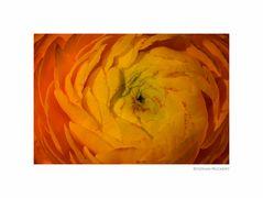 Wirbel in Orange