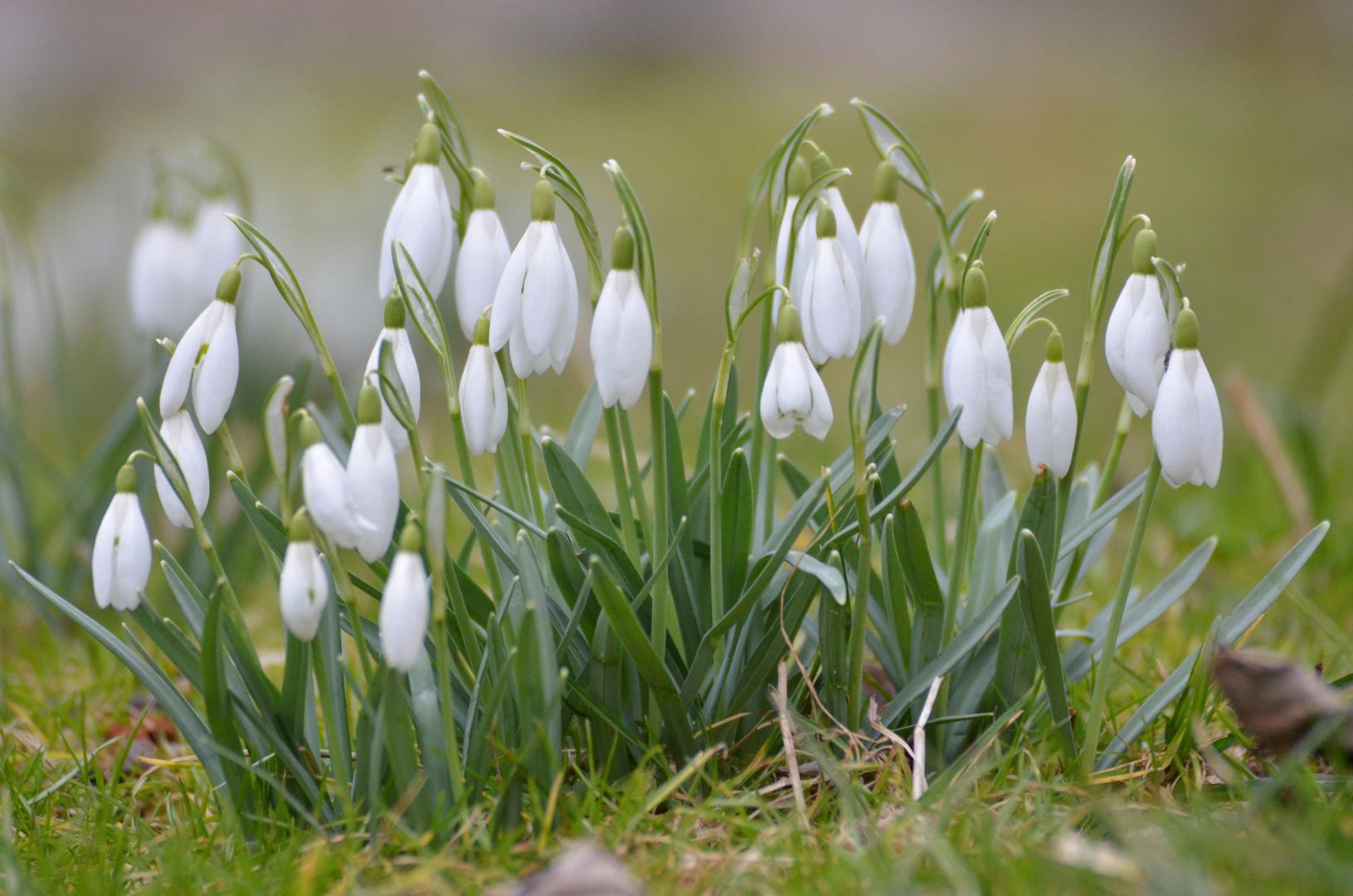 Wird es jetzt Frühling ?