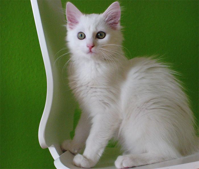 Wirklich großartig ist, dass es Katzen in allen Varianten gibt...