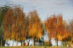 Wirre Herbstbäume