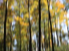 Wischer im Herbstwald